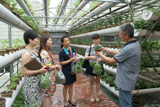 """市民在成都社区大学""""i-生态菜园""""实验基地学习体验蔬菜种植.jpg"""